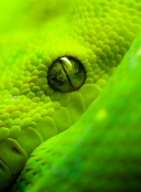 Snake